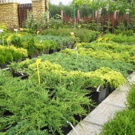 Szkółka roślin ozdobnych
